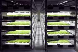 Η πρώτη ρομποτική φάρμα στον κόσμο θα ανοίξει στην Ιαπωνία