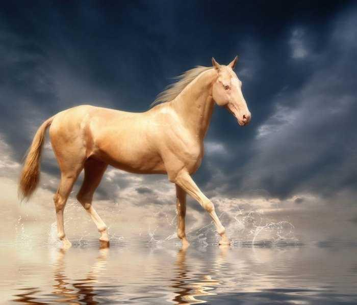 Το σπάνιο άλογο που κάποιοι αποκαλούν το «ωραιότερο στον κόσμο». Μοιάζει σαν να είναι καλυμμένο με χρυσάφι