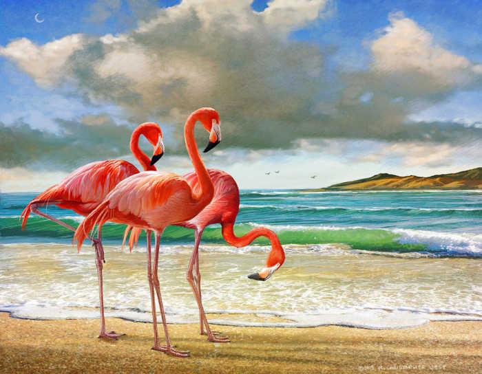 Η πανέμορφη παραλία των φλαμίνγκο!