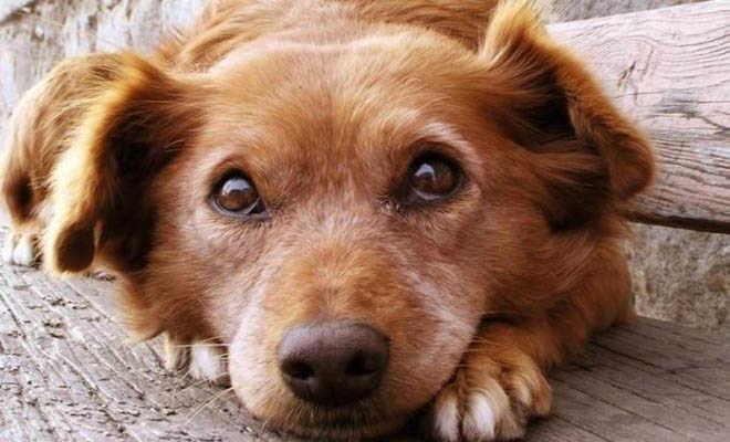 Ακου τι θέλει να σου πει ο πιο καλός σου φίλος … ο σκύλος σου