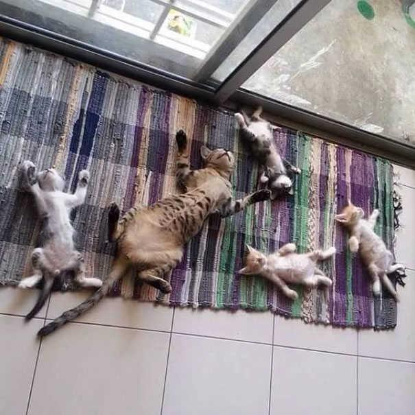 Οι γάτες αγαπούν τον ήλιο!