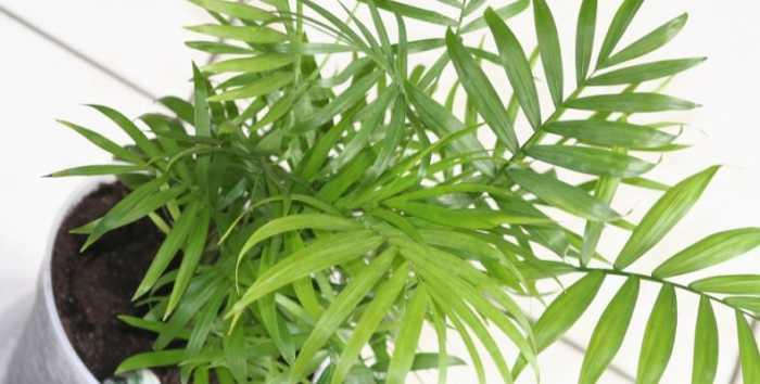 H NASA προτείνει ευεργετικά φυτά για την κρεβατοκάμαρα!