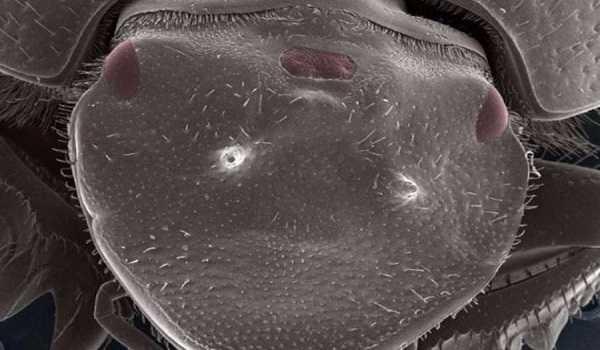 Το πρώτο ζώο με 3 μάτια που δημιούργηθηκε σε εργαστήριο