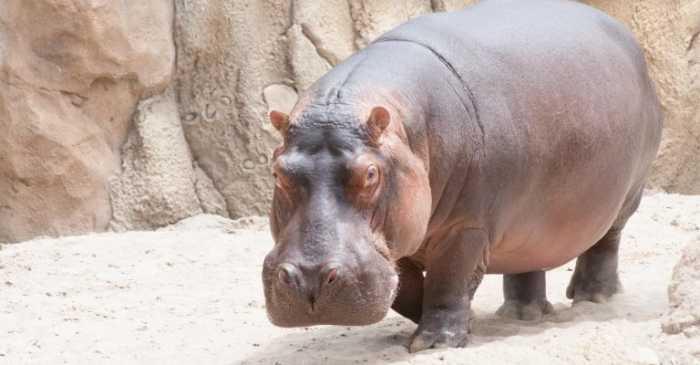 Τα πιο βαριά ζώα στον κόσμο
