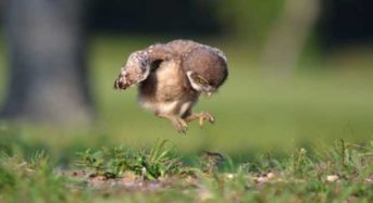 7 απίθανα βίντεο μικρών ζώων που αντιμετωπίζουν τους φόβους τους!