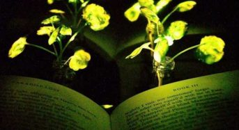Φυτά που λάμπουν θα φωτίζουν το χώρο μας;