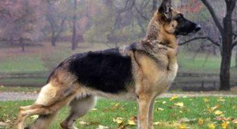 Τα Φιλαράκια: Όταν ο σκύλος σκοτώνει άλλα ζώα