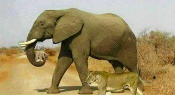 Η συνειδητότητα έχει αγγίξει το ζωικό Βασίλειο. Εμπιστοσύνη και πίστη δεν είσαι ΠΟΤΕ μόνος!