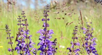 8 βότανα που «μυρίζουν» καλοκαίρι!