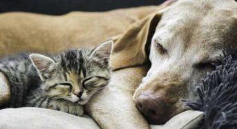 Κτηνίατροι αποκαλύπτουν τι αναζητούν τα κατοικίδια μας τις τελευταίες τους στιγμές