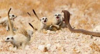 Η Άγρια Ζωή μέσα από εκπληκτικές εικόνες